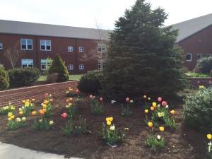 Spring flowers #2
