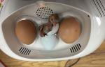 chicks #6